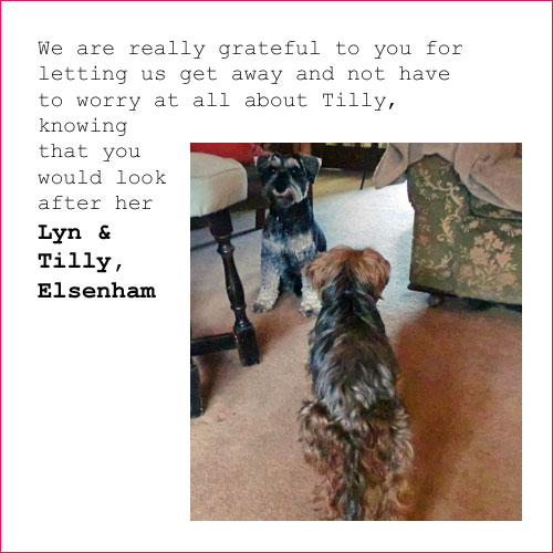 thank you from Tilly